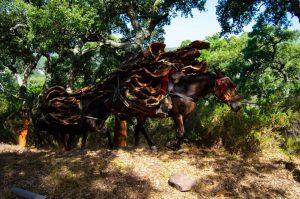 Descorche en el Parque Natural de los Alcornocales