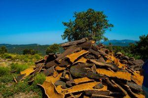 El Descorche en el Parque Natural de los Alcornocales